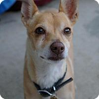 Adopt A Pet :: Fricket - Sacramento, CA