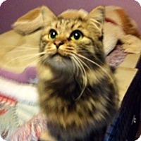 Adopt A Pet :: Cody - Monroe, GA