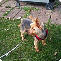 Adopt A Pet :: Moxie - Lorain, OH