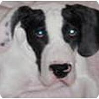 Adopt A Pet :: Champ - Cleveland, OH