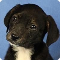 Adopt A Pet :: Mae - Minneapolis, MN