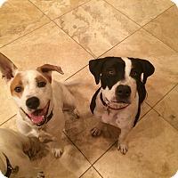 Adopt A Pet :: Simon - Surprise, AZ