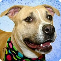 Adopt A Pet :: Puddy - Cincinnati, OH