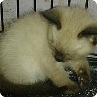 Adopt A Pet :: Darly - Whittier, CA