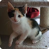 Adopt A Pet :: Delilah - Port Republic, MD