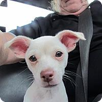 Adopt A Pet :: Tanner - Arden, NC