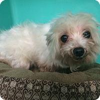 Adopt A Pet :: Tommy - Oak Ridge, NJ