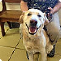 Adopt A Pet :: Luke #4 - Buckeystown, MD