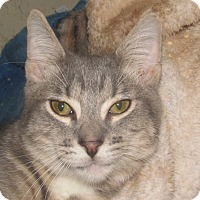 Adopt A Pet :: Solomon - New Windsor, NY