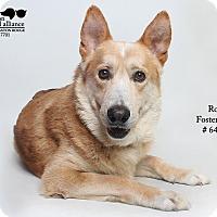 Adopt A Pet :: Rory (Foster) - Baton Rouge, LA