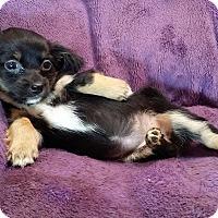 Adopt A Pet :: Dolly - Lawrenceville, GA