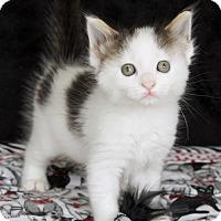 Adopt A Pet :: Link - St Louis, MO