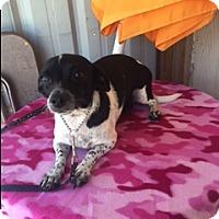 Adopt A Pet :: ZALIKI - Elk Grove, CA