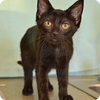Adopt A Pet :: Orchid - Larned, KS