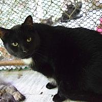 Adopt A Pet :: Leo - Pottsville, PA