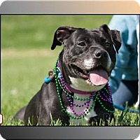 Adopt A Pet :: 41153 Lily FULLY SPONSORED plus tags - Zanesville, OH