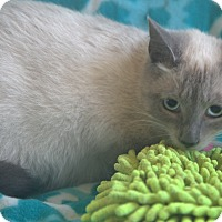 Adopt A Pet :: Hyacinth - Hagerstown, MD