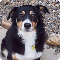 Adopt A Pet :: Lady - Longview, TX
