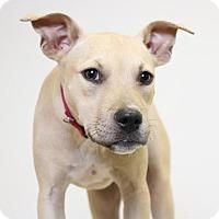 Adopt A Pet :: Hardie  D161609 - Edina, MN
