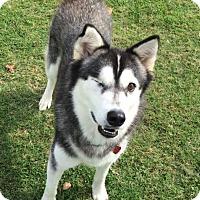 Adopt A Pet :: Farrah - Ada, OK