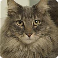 Adopt A Pet :: Alexander The Great - Sherwood, OR