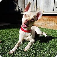 Adopt A Pet :: Kylie - San Jose, CA