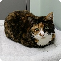 Adopt A Pet :: Emma - Austintown, OH