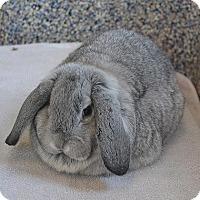 Adopt A Pet :: Winter - Fairport, NY