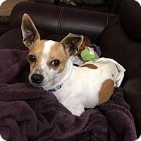 Adopt A Pet :: Wyndham - Houston, TX