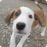 Adopt A Pet :: Tony - Von Ormy, TX