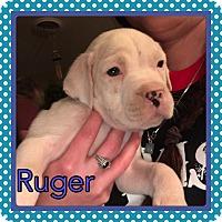 Adopt A Pet :: Ruger - Wichita Falls, TX