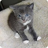 Adopt A Pet :: Alana - N. Billerica, MA