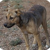 Adopt A Pet :: Andie - Post, TX