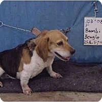 Adopt A Pet :: Bambi/Pending - Zanesville, OH