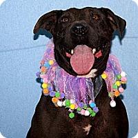 Adopt A Pet :: Sedona - Elizabeth City, NC