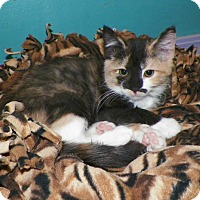 Adopt A Pet :: Sally - Dover, OH