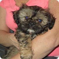 Adopt A Pet :: Ralph - Greenville, RI
