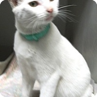 Adopt A Pet :: Rocky - Keokuk, IA
