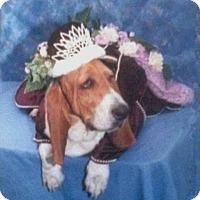 Adopt A Pet :: Oprah - Acton, CA