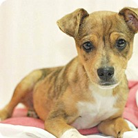 Adopt A Pet :: Colby - Knoxville, TN