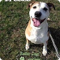 Adopt A Pet :: Breeze - Chambersburg, PA