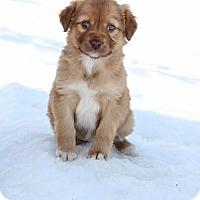 Adopt A Pet :: Haydan - New Oxford, PA