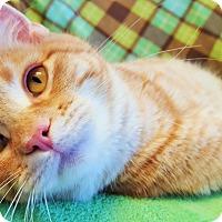 Adopt A Pet :: Ariel - Colorado Springs, CO