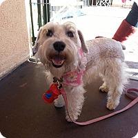 Adopt A Pet :: Eva - San Diego, CA