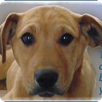 Adopt A Pet :: Toby - Marlborough, MA