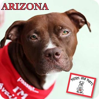American Pit Bull Terrier Mix Puppy for adoption in Baltimore, Maryland - Arizona