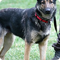 Adopt A Pet :: Kashi - Mt. Airy, MD