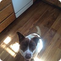 Adopt A Pet :: Lexi - Ogden, UT
