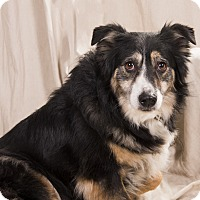 Adopt A Pet :: Betty BC - St. Louis, MO