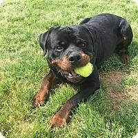 Adopt A Pet :: Kane - Rexford, NY